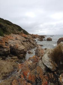 Lichen-covered rocks - west coast, Tasmania